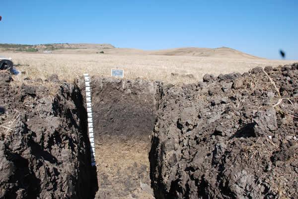 Calcolo della Soil Suitability